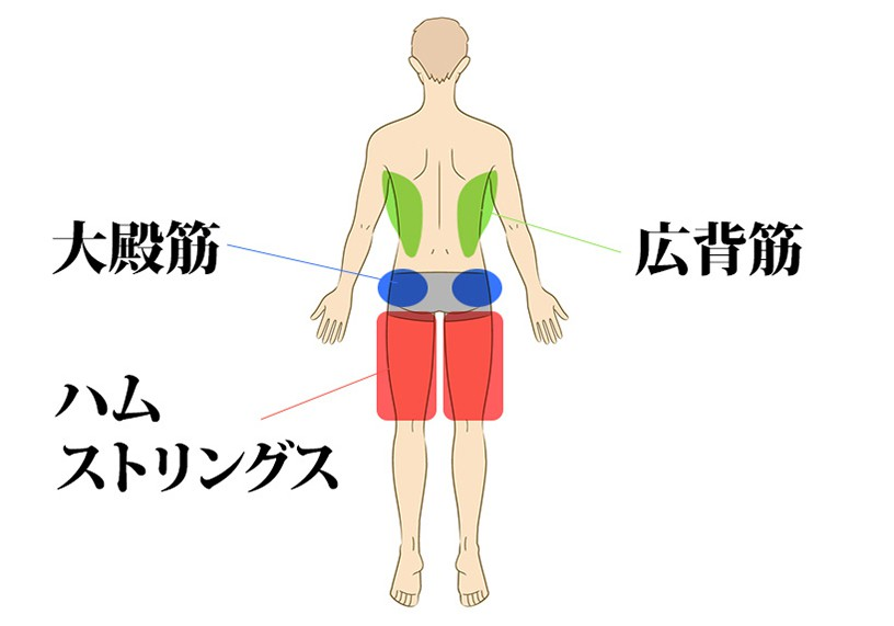 腰痛の原因となる筋肉はこれ!