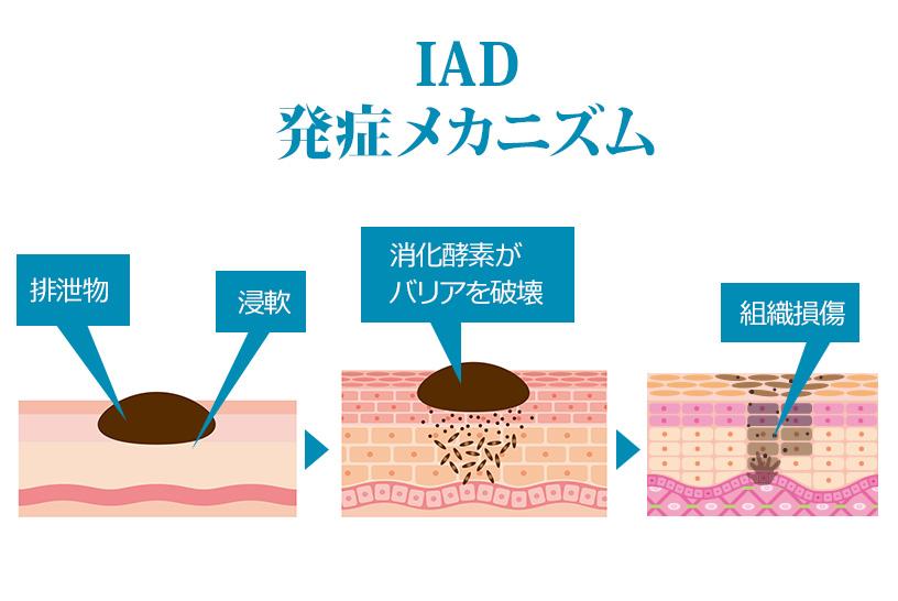 IADは皮膚内部にも損傷が起こっている