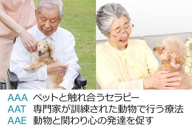 ペットが高齢者に与える癒やし効果