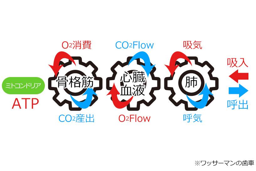 STEP1「ワッサーマンの歯車で酸素運搬過程を理解する」