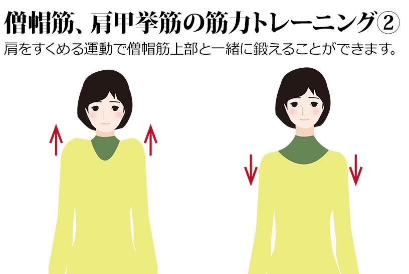肩をすくめる運動で僧帽筋上部と一緒に鍛えることができます。
