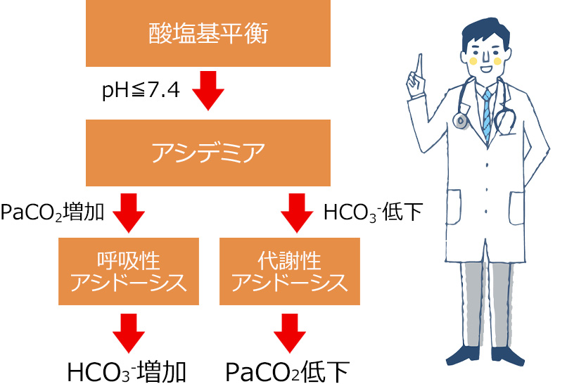 酸塩基平衡から考える、リハビリ介入のポイント