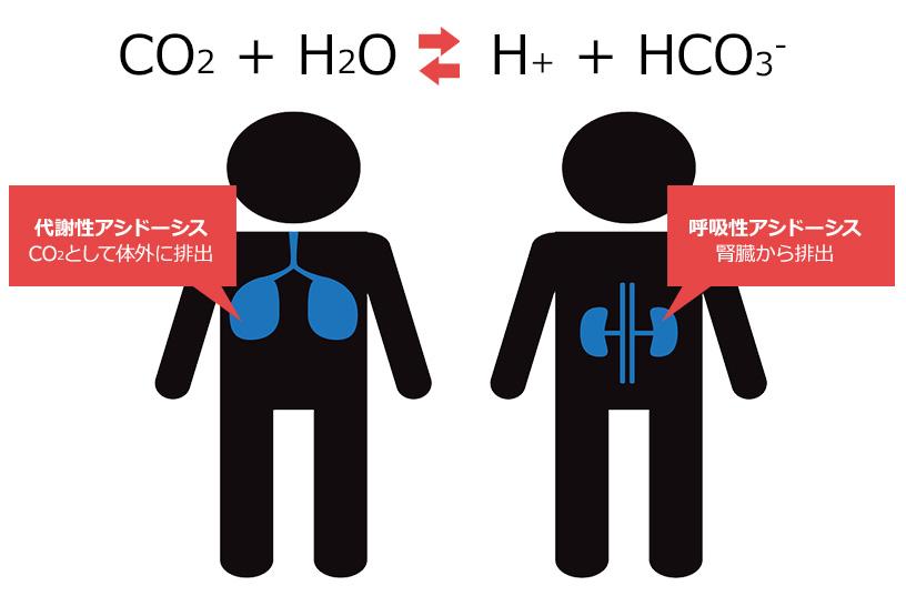 酸塩基平衡とは?生体の緩衝作用について理解しよう
