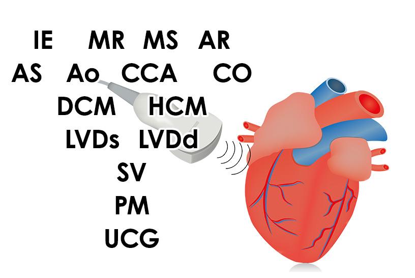 心エコー検査で見かける略語や検査の正常値を解説します