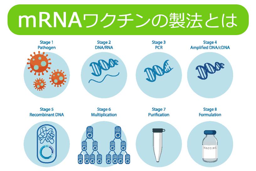 mRNAワクチンの製法とは