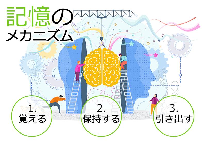 記憶のメカニズムと認知症