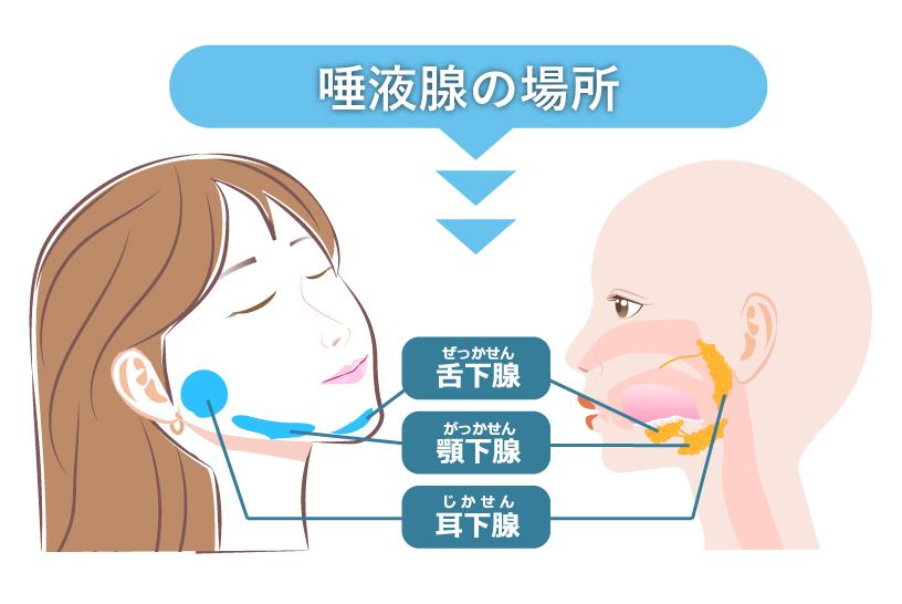 なぜ唾液の分泌が減るの?唾液や唾液腺について知ろう