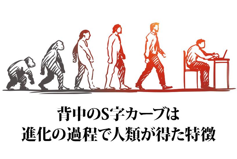 背中のS字カーブは進化の過程で人類が得た特徴